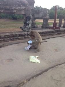Monkey enjoying his reward