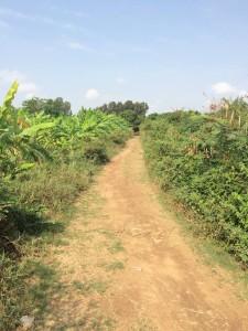 Rural bike path